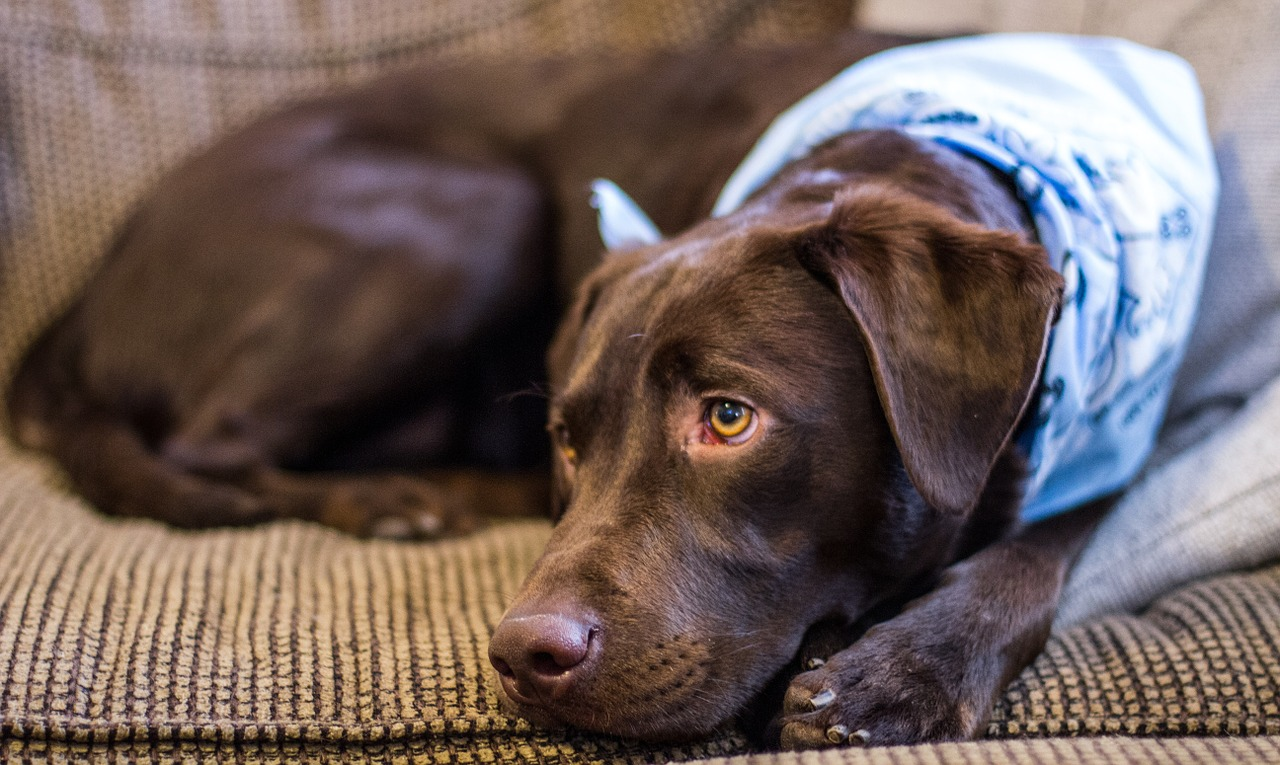 pet dander can be helped with an air purifier